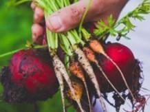 légumes de mauro