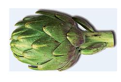 cure detox : artichaut