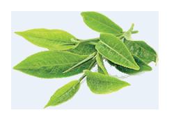 cure detox : thé vert